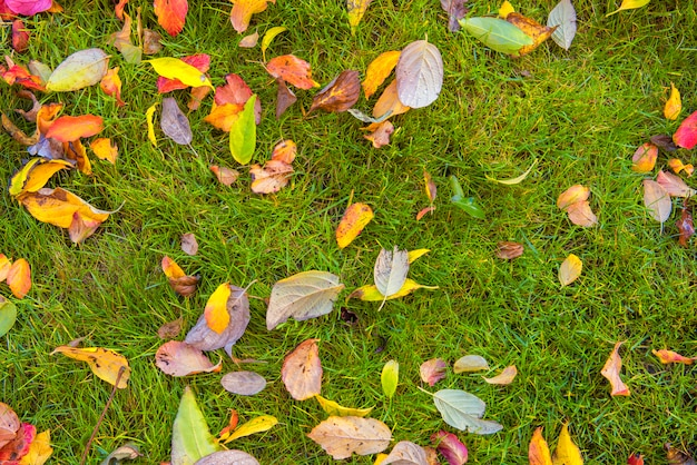 Haute vue angle, de, feuilles automne, sur, herbe