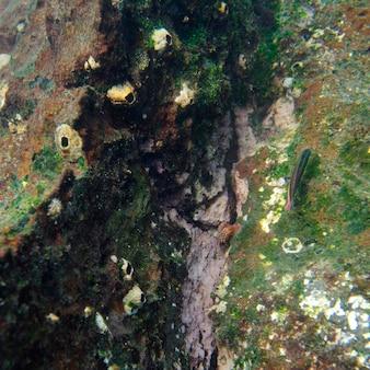 Haute vue angle, de, a, poisson, sous-marin, baie gardner, île espanola, îles galapagos, equateur