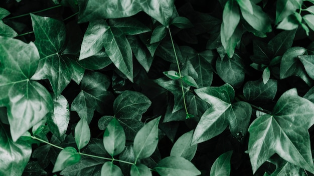 Haute vue angle, de, vert, feuille, plante