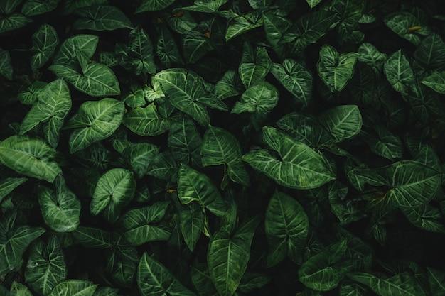 Haute vue angle, de, vert, feuilles