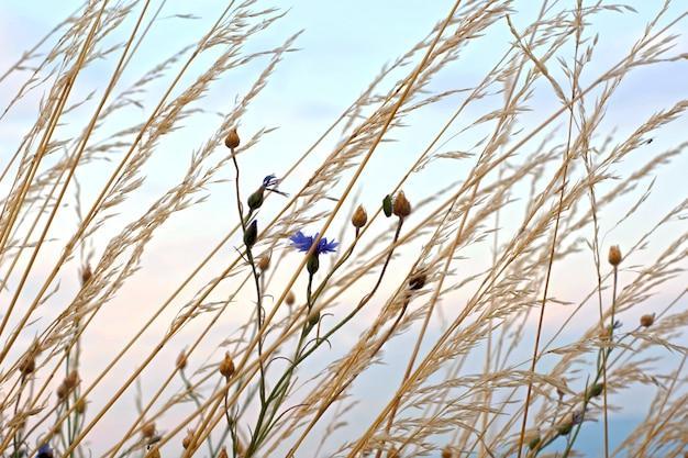Hautes herbes et fleurs contre le ciel.