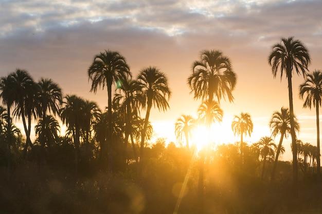 Hauts palmiers et ciel magnifique avec des nuages au coucher du soleil