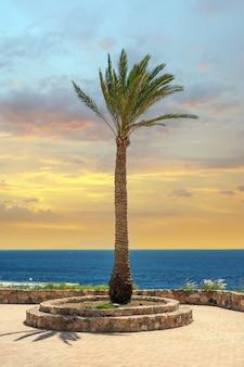 Hauts palmiers sur fond de mer et ciel coucher de soleil lumineux