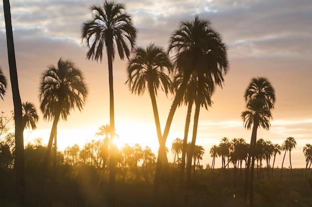 Hauts palmiers et paradis merveilleux avec des nuages au coucher du soleil