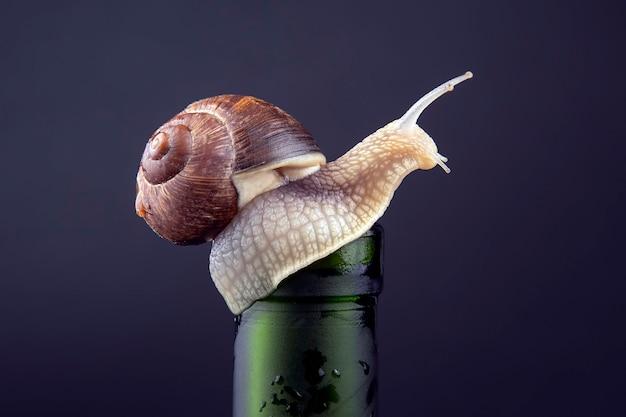 Hélix pomatia. escargot raisin sur une bouteille sur un fond sombre. mollusque et invertébré. nourriture de viande protéinée gastronomique.