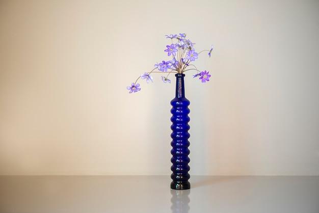 Hepatica fleurs violettes anémones dans un long vase bleu isolé