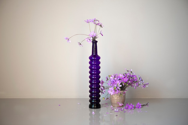 Hepatica fleurs violettes avec des pétales tombés dans deux vases en verre isolés