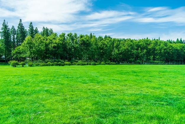 Herbe et arbres dans le parc sous le ciel bleu
