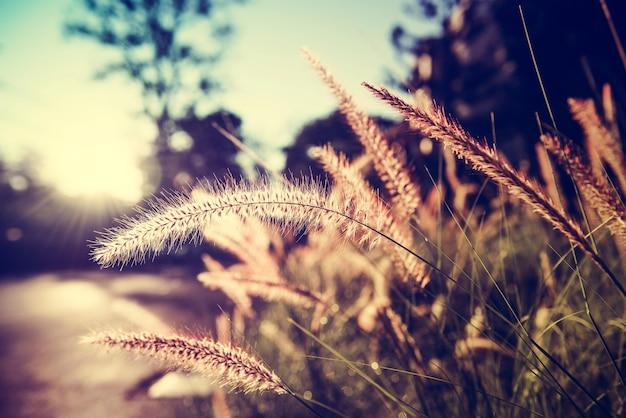 Herbe au soleil sur la campagne suburban