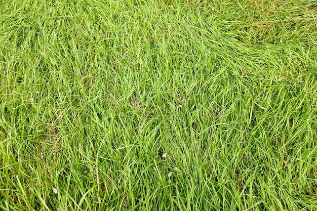 Herbe d'automne vert naturel. photo du point haut pour le fond.