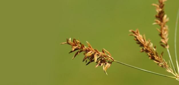 Herbe avec de belles fleurs