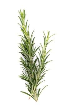 Herbe bio romarin isolé sur blanc