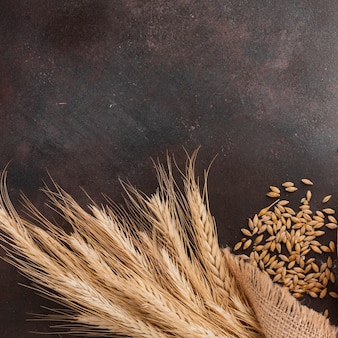 Herbe de blé et graines