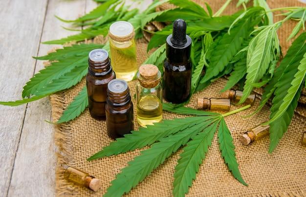 Herbe de cannabis et feuilles pour traitement bouillon, teinture, extrait, huile. mise au point sélective.