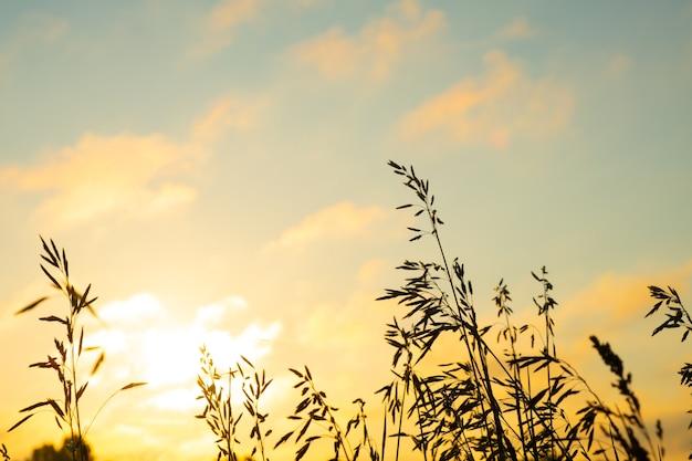 Herbe des champs contre le ciel orange au lever du soleil, paysage avec ciel matinal d'été.