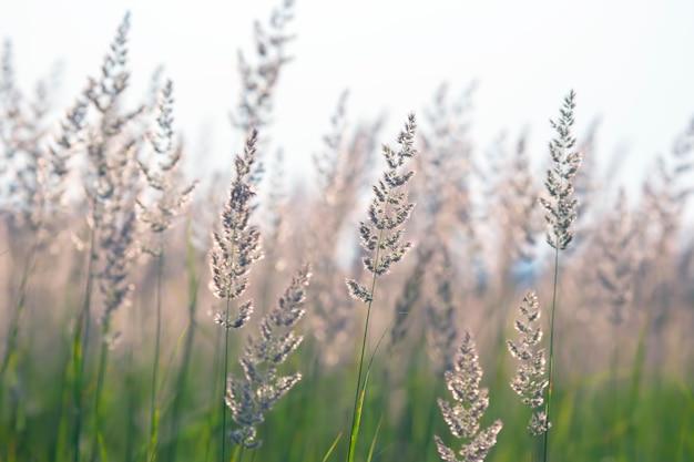 Herbe des champs et fleurs en contre-jour. nature et botanique florale