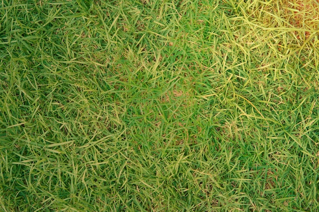 Herbe de cour ou champ pour le fond avec soleil flare
