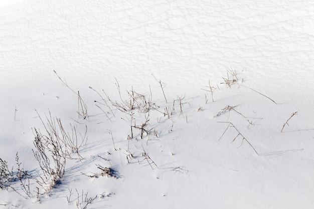 Herbe couverte de neige et de givre