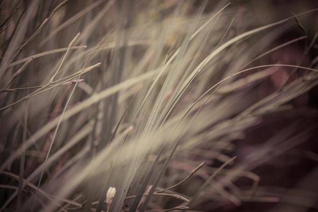 L'herbe dans le champ
