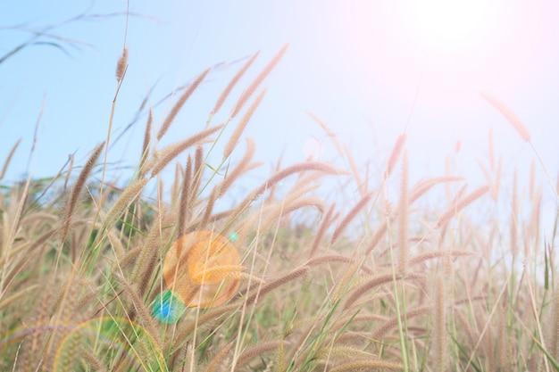 Herbe d'été avec paysage, ciel de la lumière du soleil, fond naturel