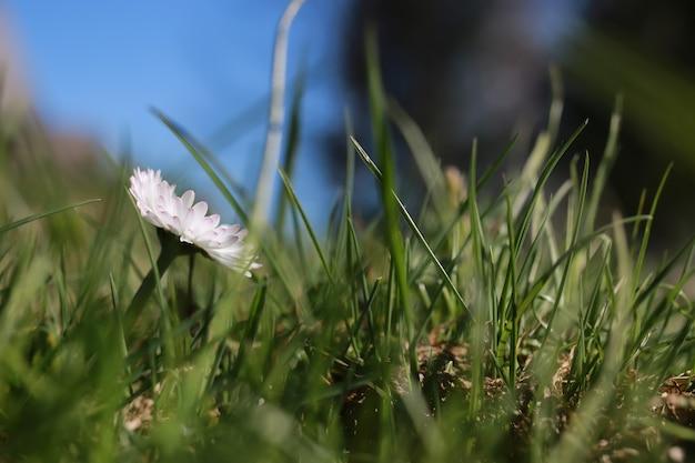 Herbe et fleur de printemps