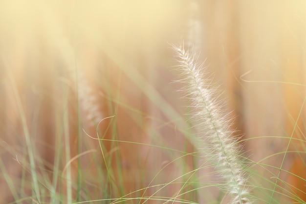 Herbe fleurie dans le jardin. concept de mémoire.