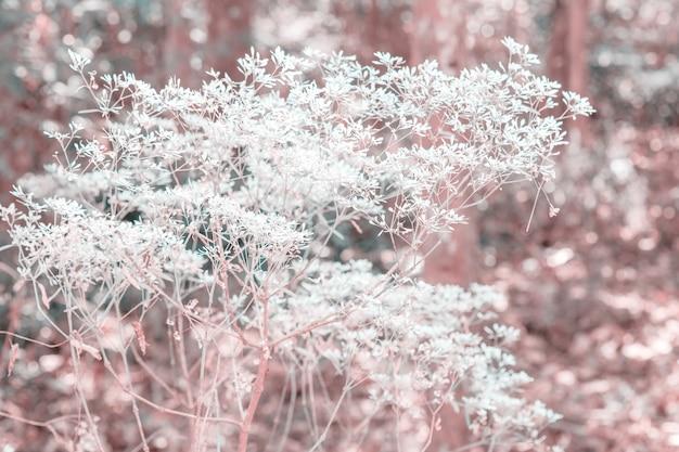 Herbe de fleurs colorées en dégradé