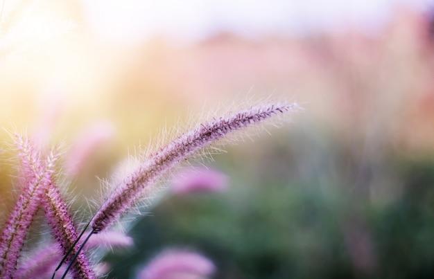Herbe de fleurs colorées faite avec dégradé pour le fond