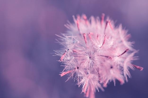 Herbe de fleurs colorées pour le fond