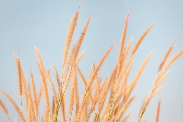 L'herbe des fleurs impacte la lumière du soleil en automne