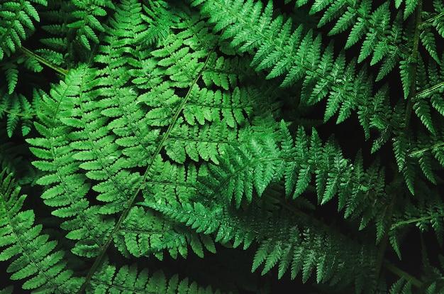 Herbe de forêt clair foncé, fond de fougère