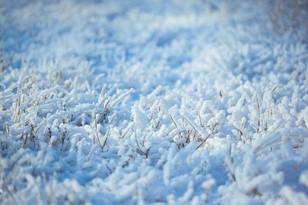 Herbe glacée forte avec des cristaux de glace