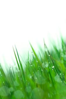 Herbe humide de fond le matin