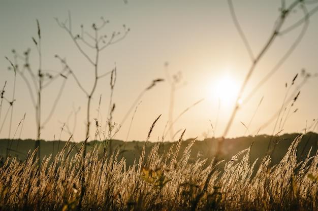 Herbe jaune sur le terrain au soleil au coucher du soleil. monde, concept de jour de l'environnement pays. superbe lever de soleil de prairie avec lumière bokeh. automne, printemps, été.