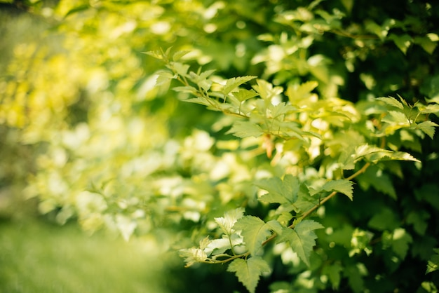 Herbe à la lumière du coucher du soleil sur fond de nature floue avec arbre et bokeh
