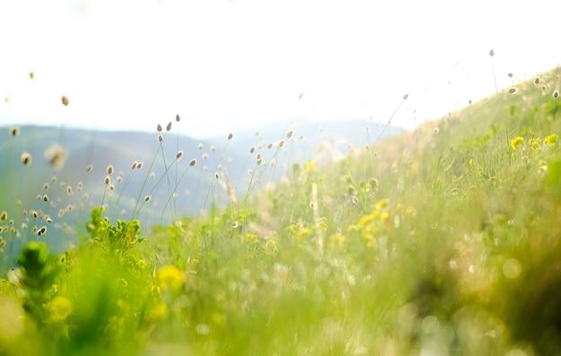 Herbe de montagne sur un arrière-plan flou
