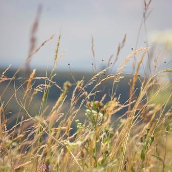 Herbe de montagne et fleurs sauvages
