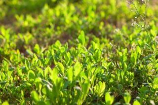 L'herbe non urbaine
