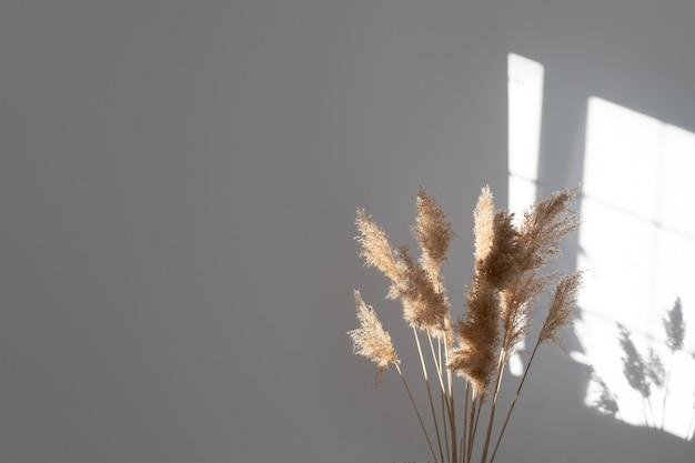 Herbe de la pampa aux couleurs neutres plume de roseau tige de pampa séchée fleur décorative en plumes