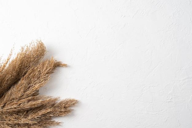Herbe de la pampa à plat sur fond de surface blanche herbe de la pampa avec un espace pour le texte vue de dessus