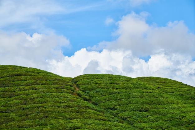 Herbe paysage montagnes environnement malaisie cameron