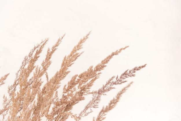 Herbe pelucheuse de la pampa en plein air dans des couleurs pastel claires