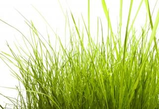 L'herbe en plein air