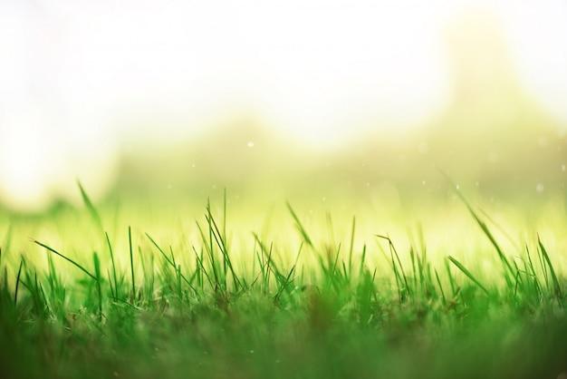 Herbe de printemps verte fraîche avec effet de fuites de soleil. fond de nature abstraite. bannière