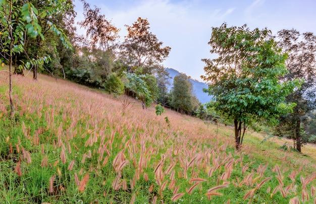 Herbe qui fleurit sur la colline