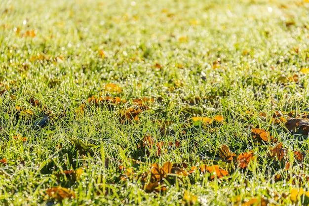 L'herbe et la rosée ont un impact sur la lumière du soleil le matin d'automne.