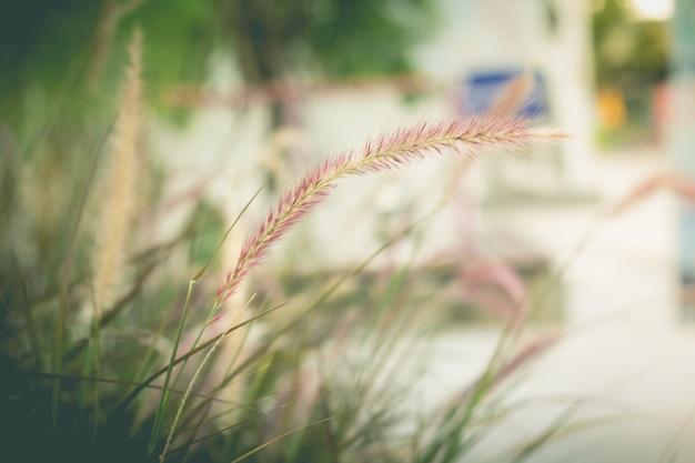 Herbe sauvage dans le jardin