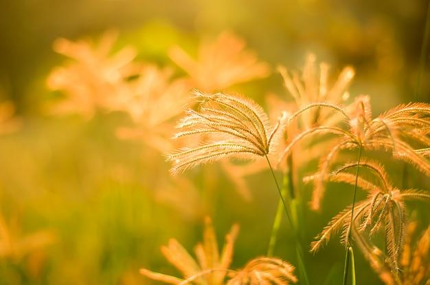 L'herbe se bouchent