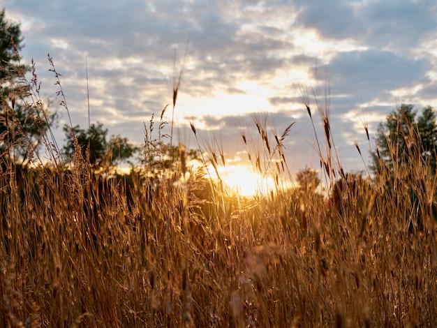 Herbe sèche au coucher du soleil