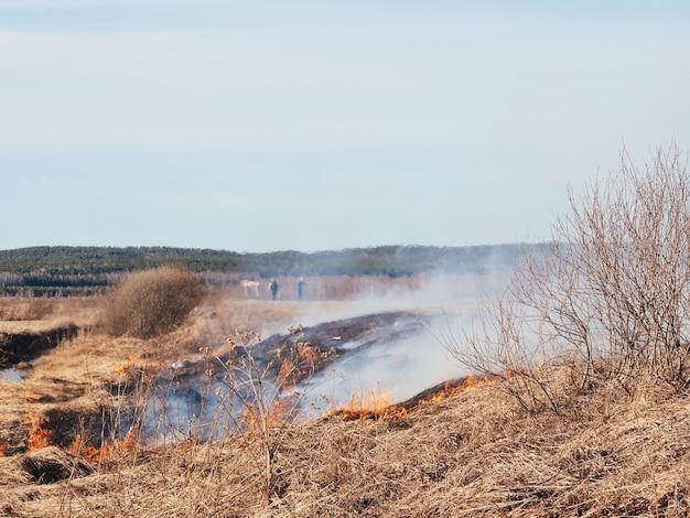 L'herbe sèche brûle sur le terrain par temps chaud. feux de forêt dangereux, catastrophe. fossé avec eau, prévention incendie, équipement de sécurité incendie.